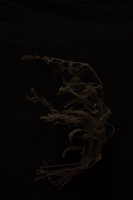 nature morte de Francesca Loprieno